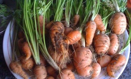 este morcov violet bun pentru pierderea in greutate