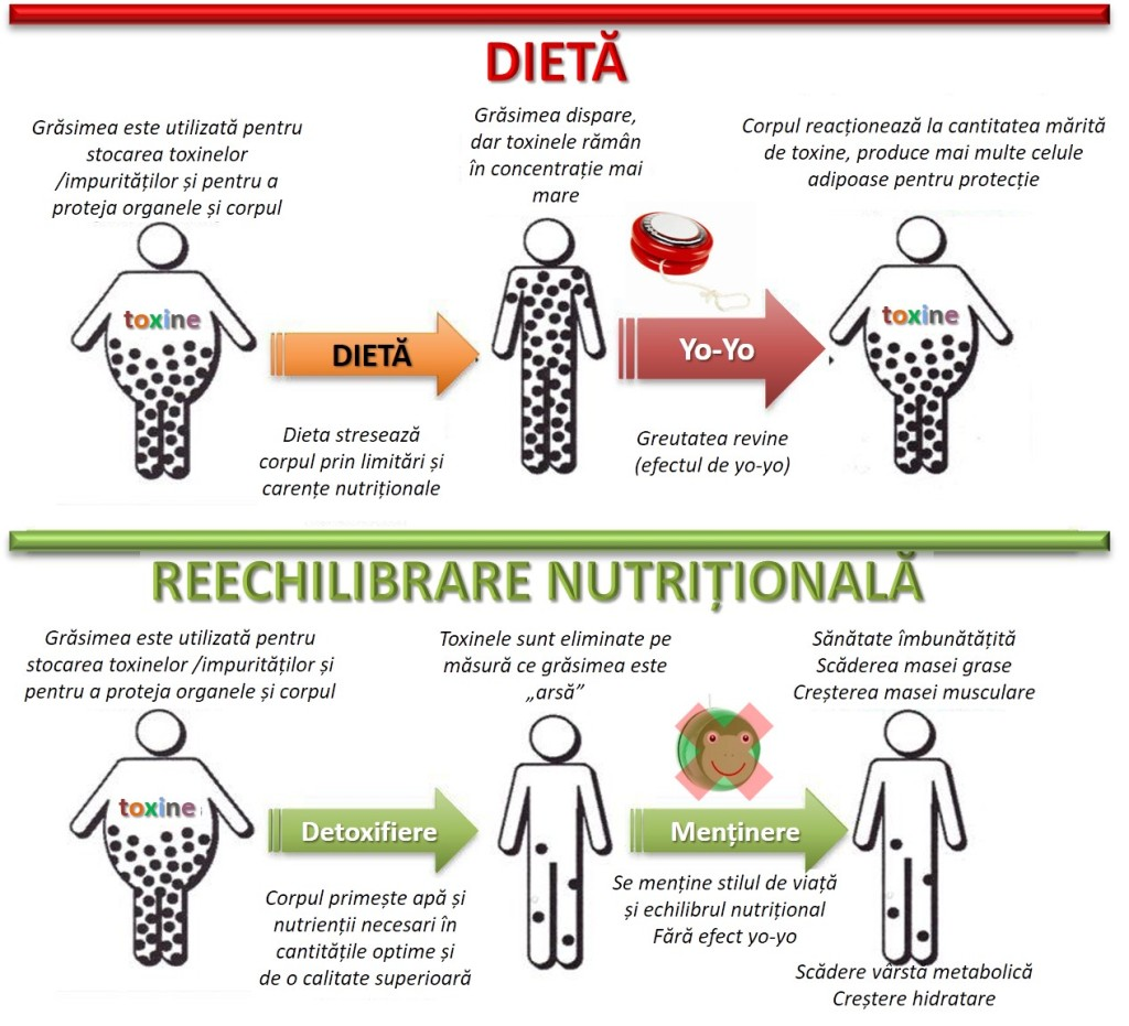 sănătatea și pierderea în greutate a mitocondriilor