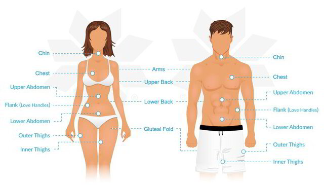 Ce se intampla cu tesutul gras atunci cand slabim