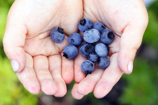 Dieta cu fructe de pădure, cea mai simplă din lume   Dietă şi slăbire, Sănătate   keracalita-jaristea.ro