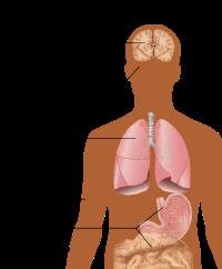 cum să arzi grăsimea de organ pierderea de grăsime de zahăr