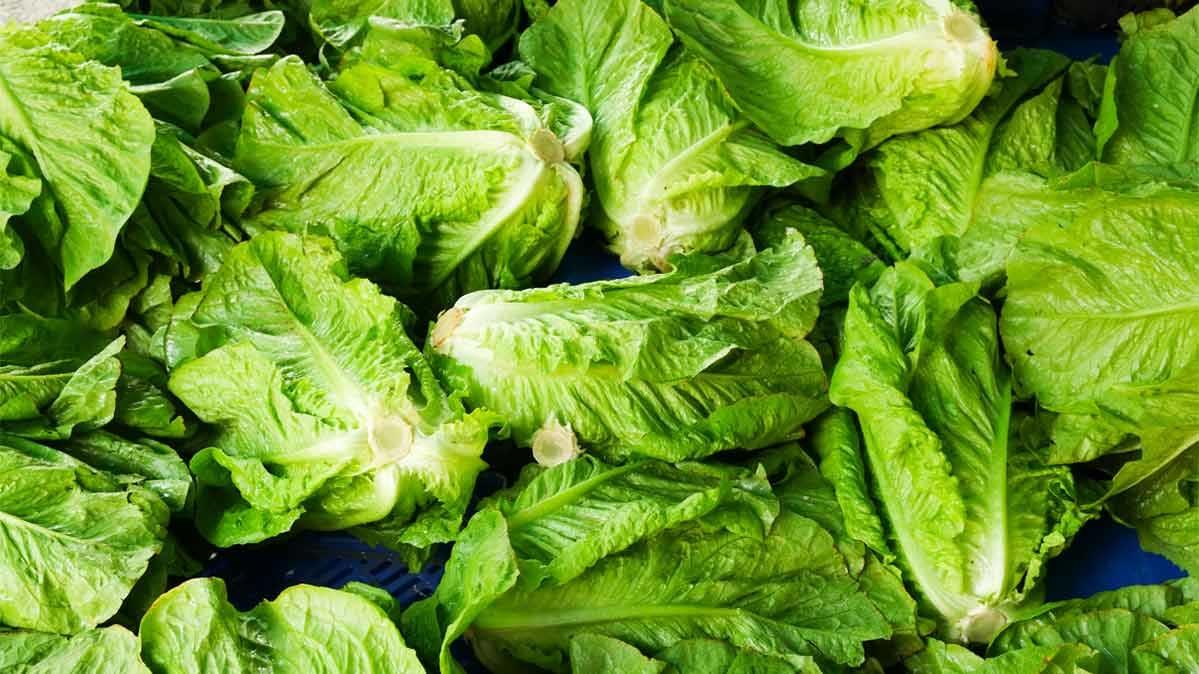 salata de romă este bună pentru pierderea în greutate