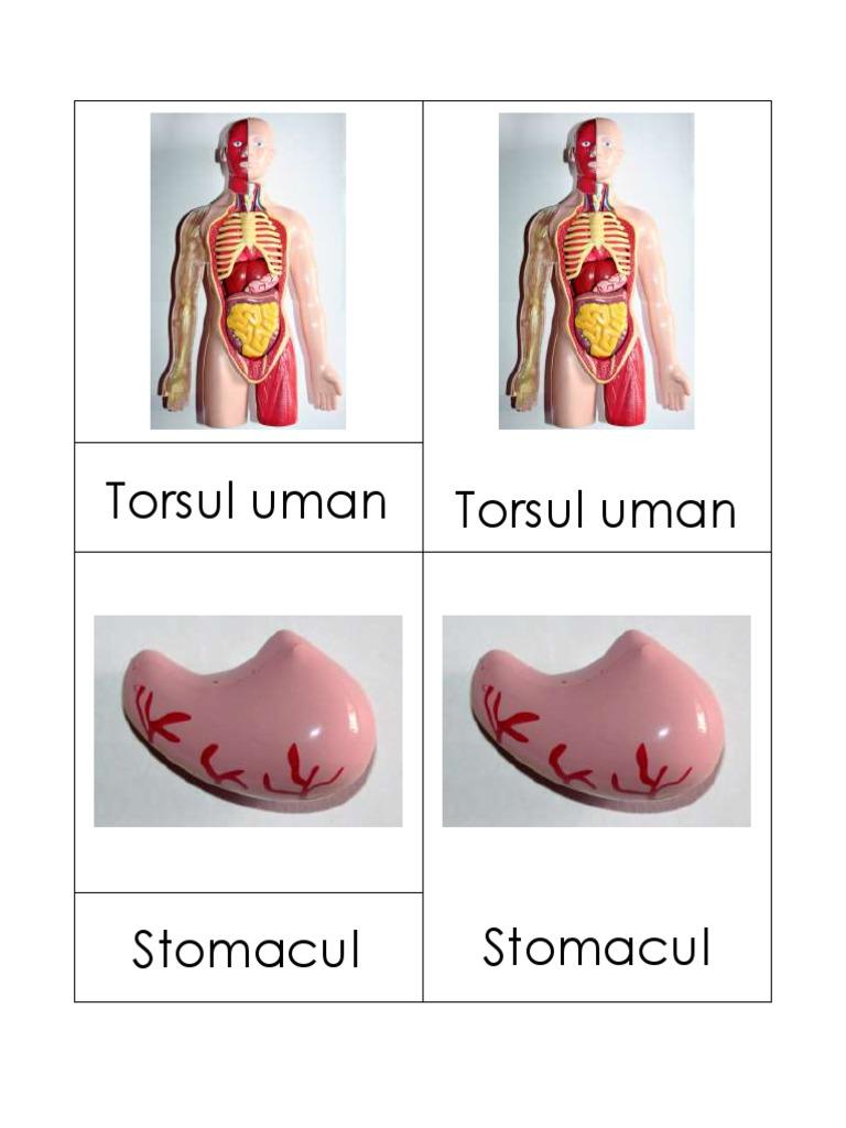 revizuirea subțire a corpului