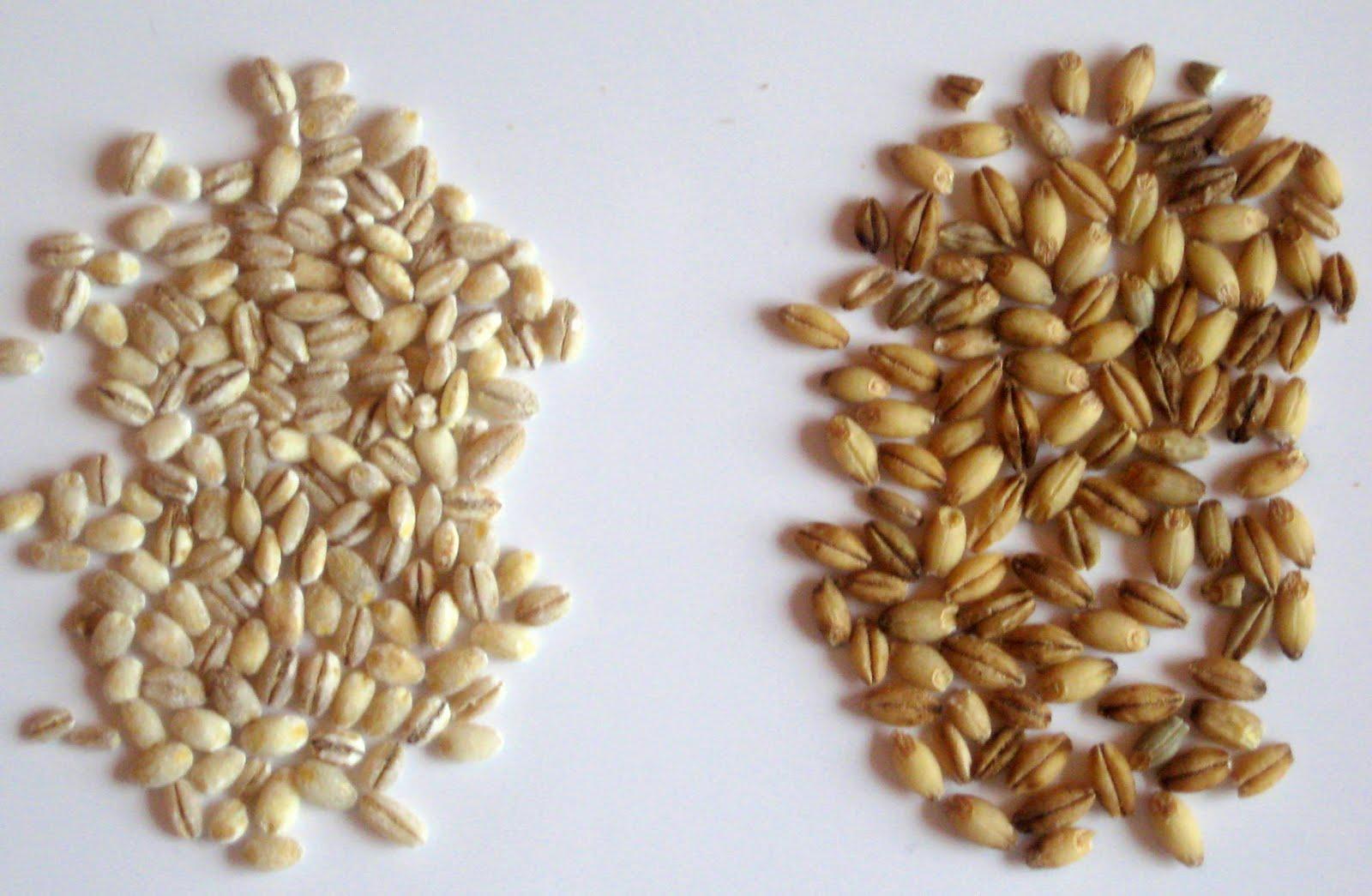 7 kilograme în 7 zile! Cum folosești ORZUL în CURA DE SLĂBIRE?