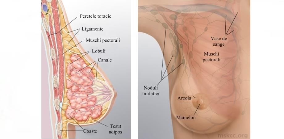 Inversare a mamelonului de pierdere în greutate