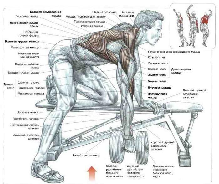 Factorii comuni care contribuie la apariţia durerilor de spate:
