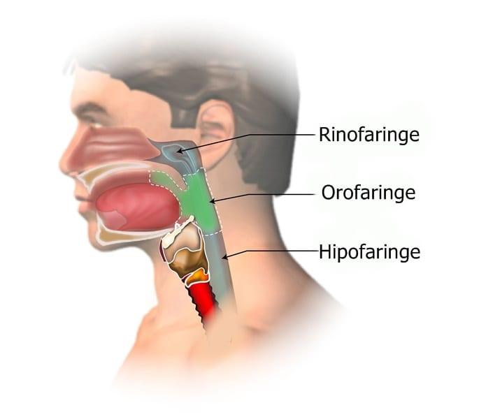pierdere în greutate oboseală durere în gât