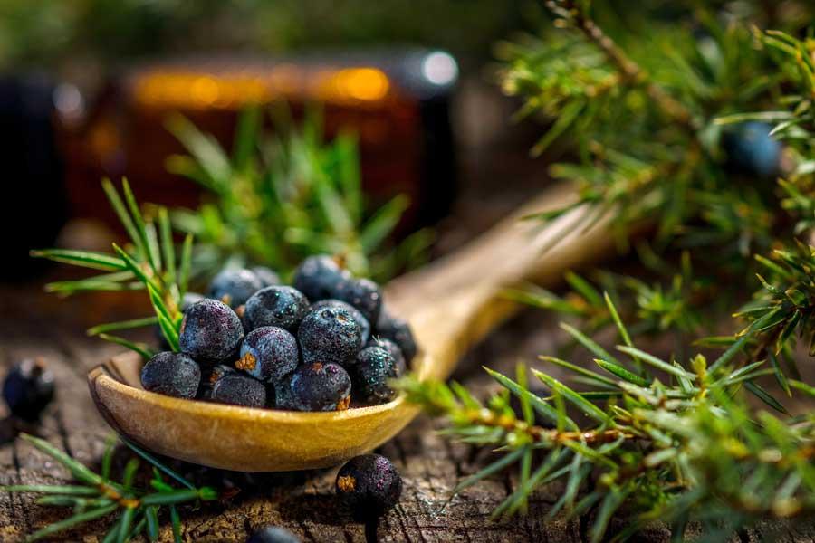pierderea de grăsime a fructelor de ienupăr pierdere de grăsime înveliș de căldură