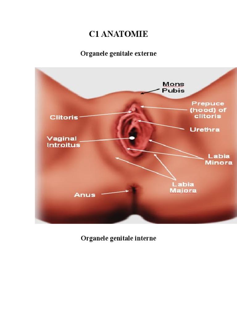 Plastia labiilor mari - labioplastia
