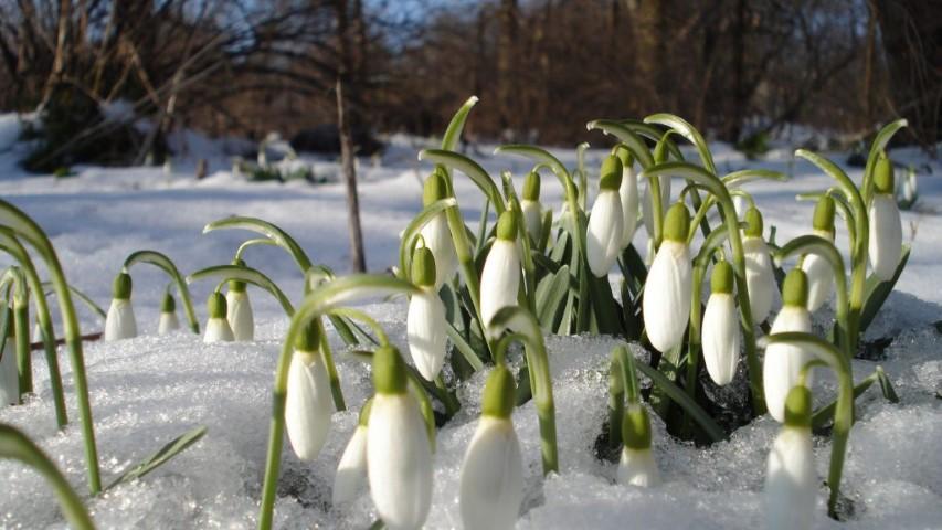 Nu uitați să plantați bulbii florilor de primăvară!