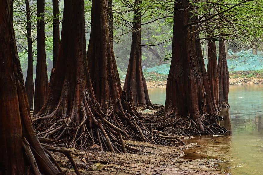 copaci pentru pierderea în greutate