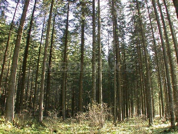 Primăvara în pădure este un eseu. Pădurea de primăvară