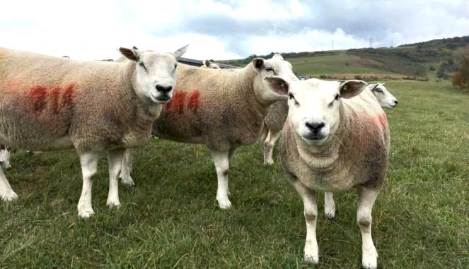 oile pierd în greutate puzzle-uri de slăbit