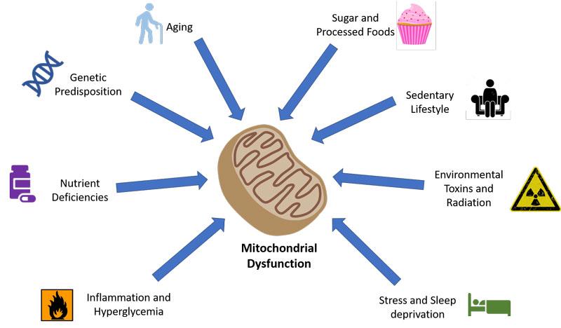 Supraponderal, obezitate