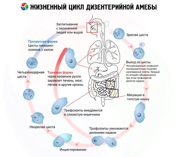 pierdere în greutate de amoeba a implinit 40 de ani si nu poate slabi
