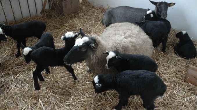oile pierd în greutate băuturi amestecate cu arderea grăsimilor