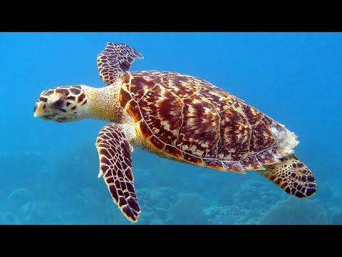 țestoase anturaj de pierdere în greutate