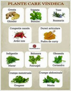 8 plante sănătoase care ajută la slăbit