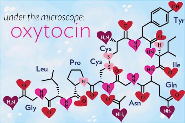 oxitocina ajută la pierderea în greutate