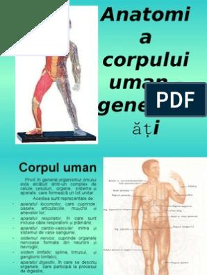 proces subțire al corpului