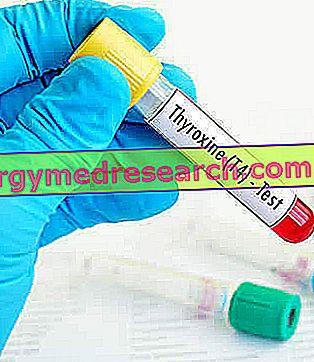 L-tiroxină pentru scăderea în greutate - Hormoni November